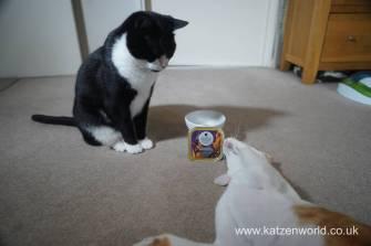 Feline Cuisine Katzenworld0011