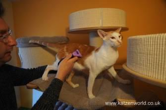 furminator Katzenworld0011