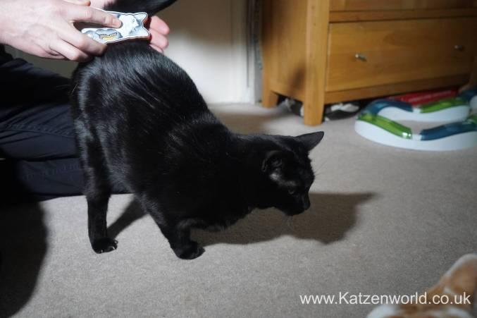 Katzenworld Monmoncats brush0007