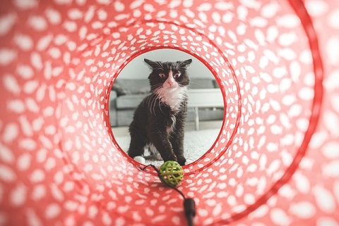 a cat tunnel
