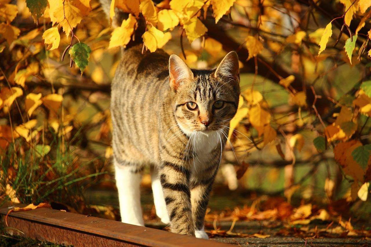 Top Tips From Cats Protection for Keeping Puss Safe This Autumn