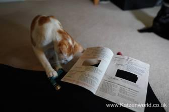 Katzenworld PetPointer0002