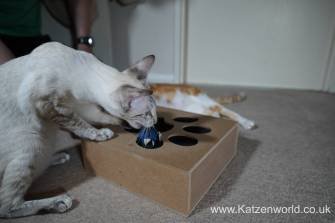 Katzenworld Whack-a-Mouse0010