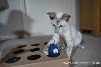 Katzenworld Whack-a-Mouse0015