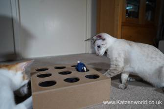 Katzenworld Whack-a-Mouse0016