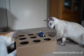 Katzenworld Whack-a-Mouse0016