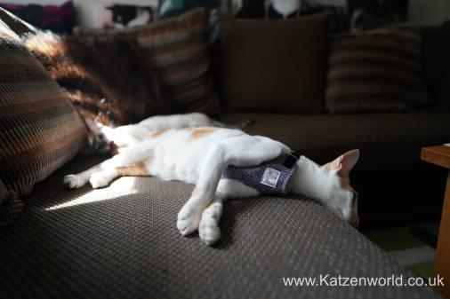 Katzenworld equi-stitch cat harness0008