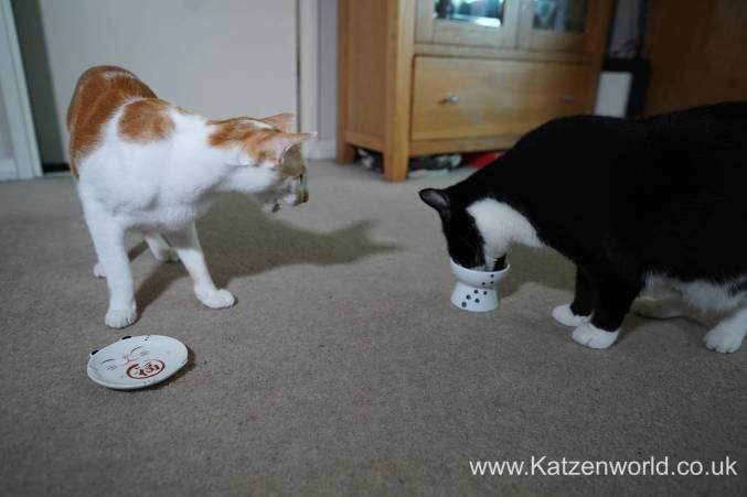 Katzenworld webbox cat treats0023