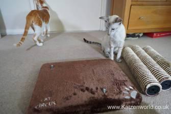 Katzenworld animed direct cat scratcher0003