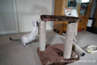 Katzenworld animed direct cat scratcher0005