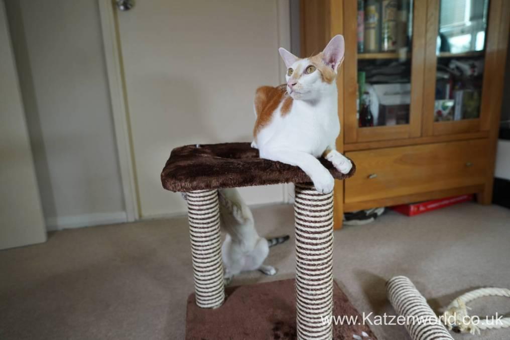 Katzenworld animed direct cat scratcher0007