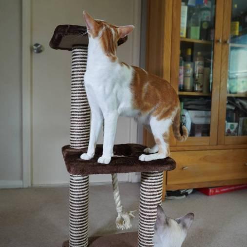 Katzenworld animed direct cat scratcher0010
