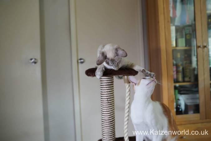 Katzenworld animed direct cat scratcher0019