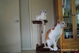 Katzenworld animed direct cat scratcher0021