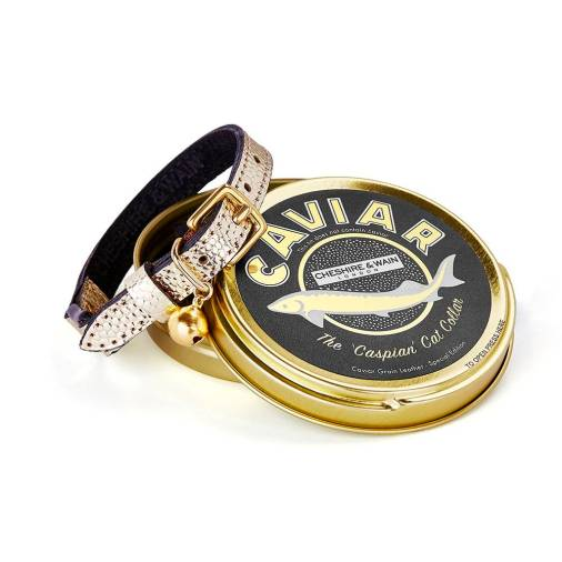 Caviar+Collection+Caspian+cat+collar