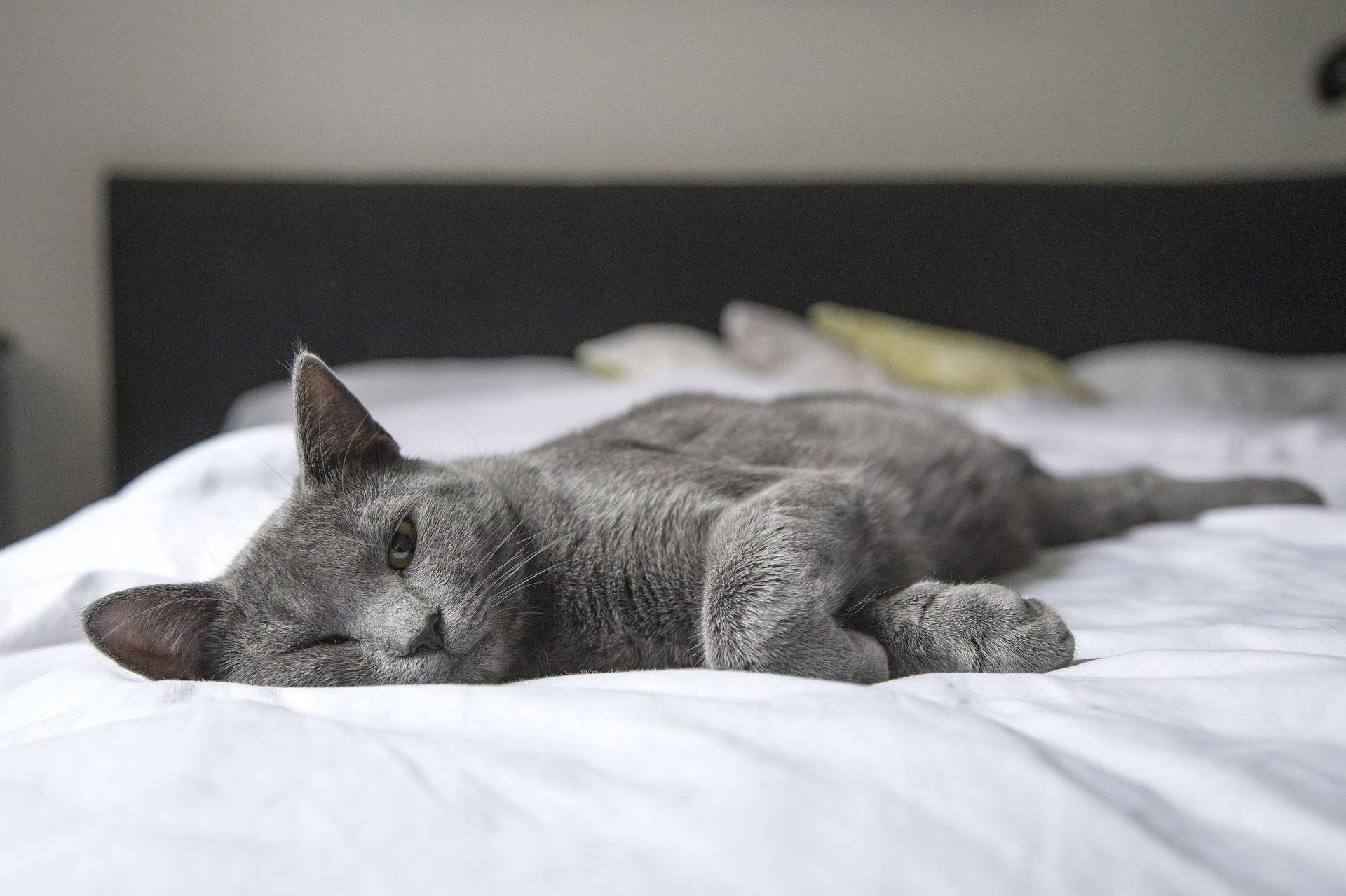 Why a Live-in Homesitter Gives you Extra Peace of Mind for your Pets
