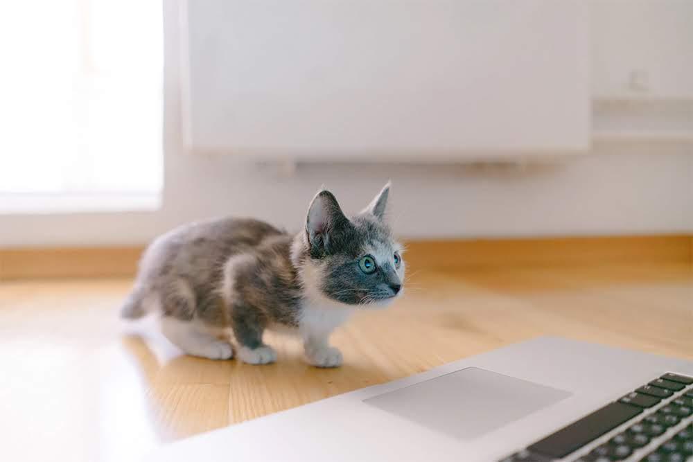feline-friend-3