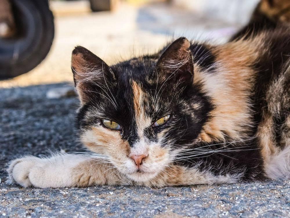 feral-cats-adorable-danger-3