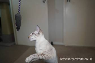 Katzenworld Christmas Stories0043