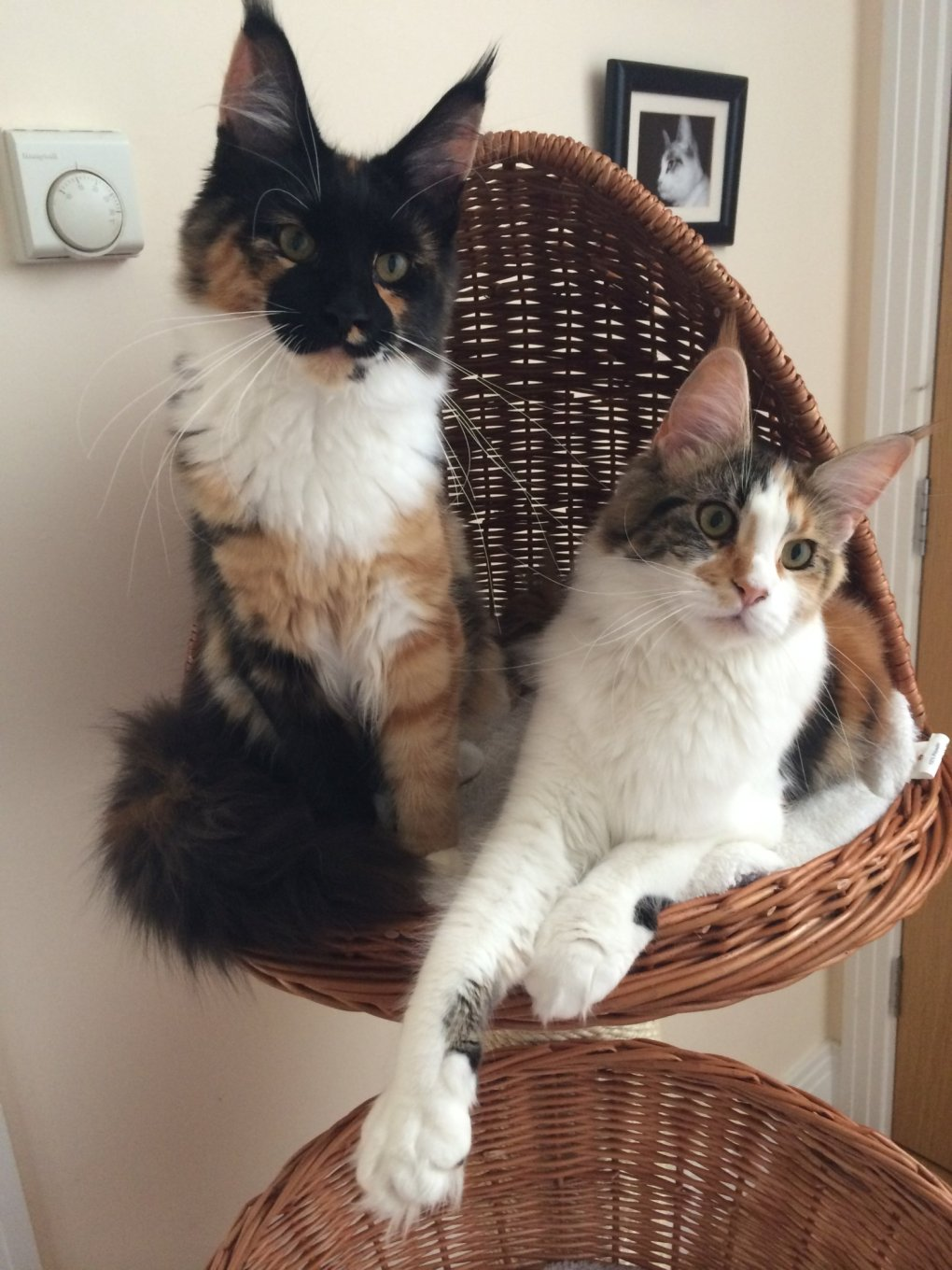 How to Find the Best Cat Scratching Tower for Your Cat - Katzenworld