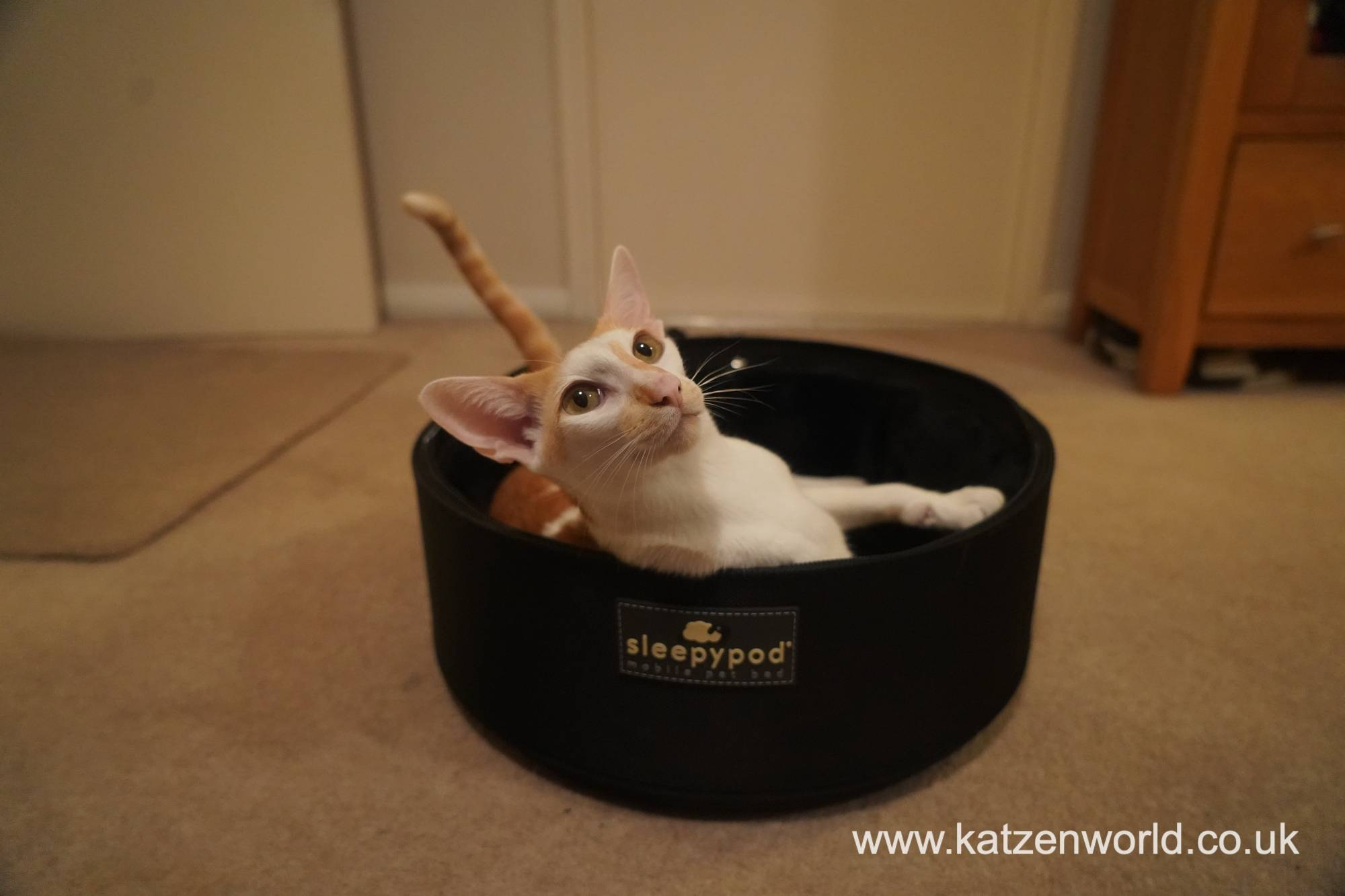 Renegade: Which of the Sleepypod Carriers Suits you and Your Feline Companion Best?