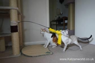 Katzenworld scratch tree cuff0008