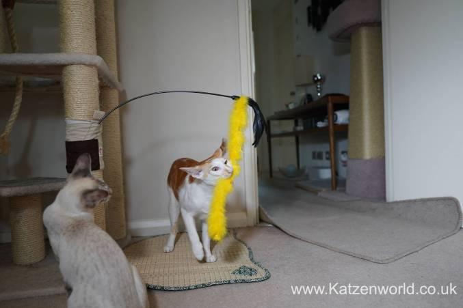 Katzenworld scratch tree cuff0010