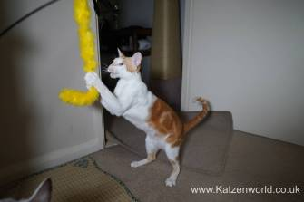 Katzenworld scratch tree cuff0013