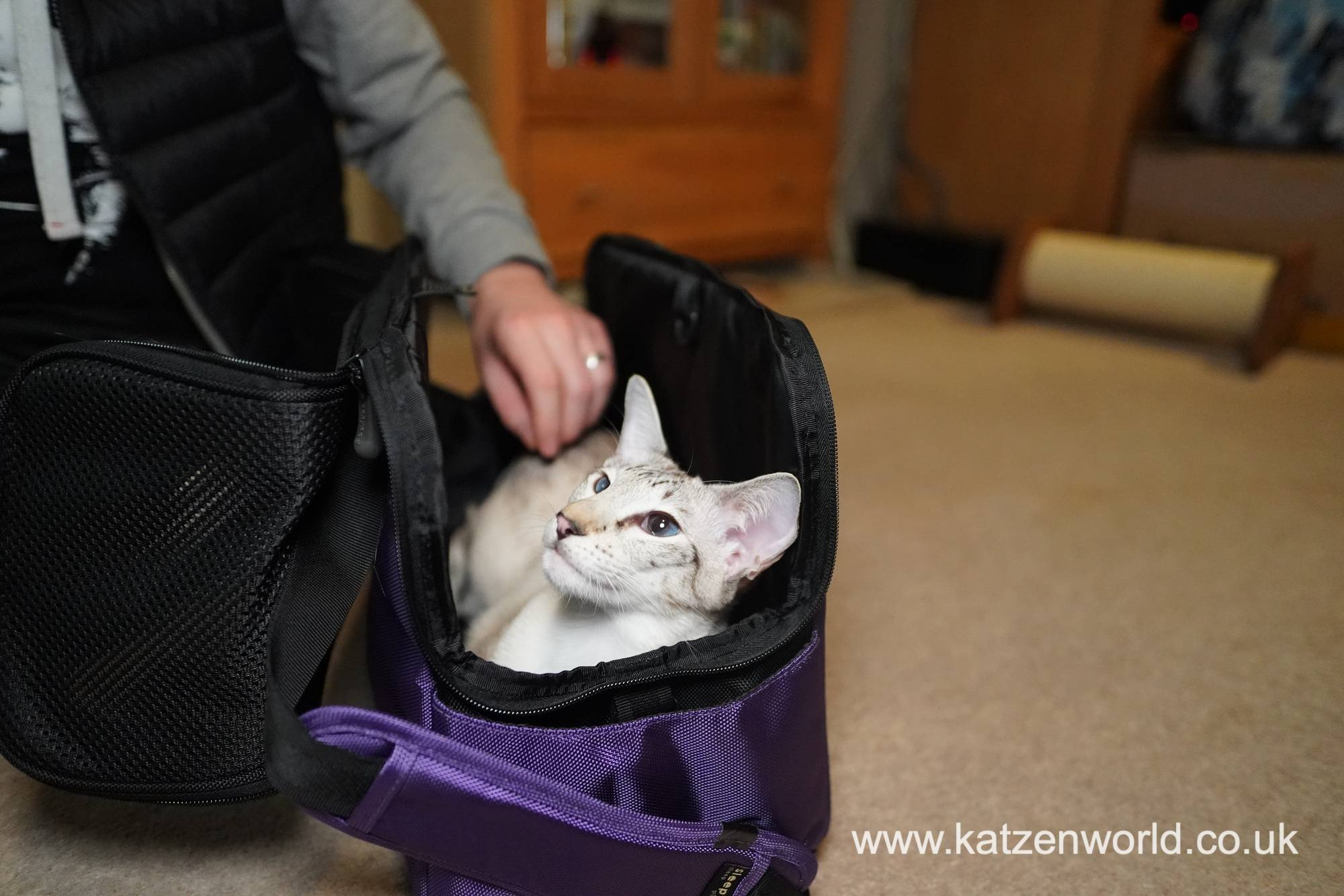 Freya: A Cosey Carrier worthy of a Queen!