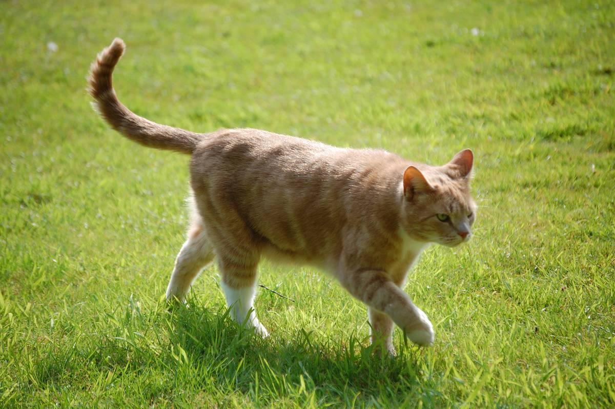 Wanted: Cat Owners Whose Pets Walk on The WildSide