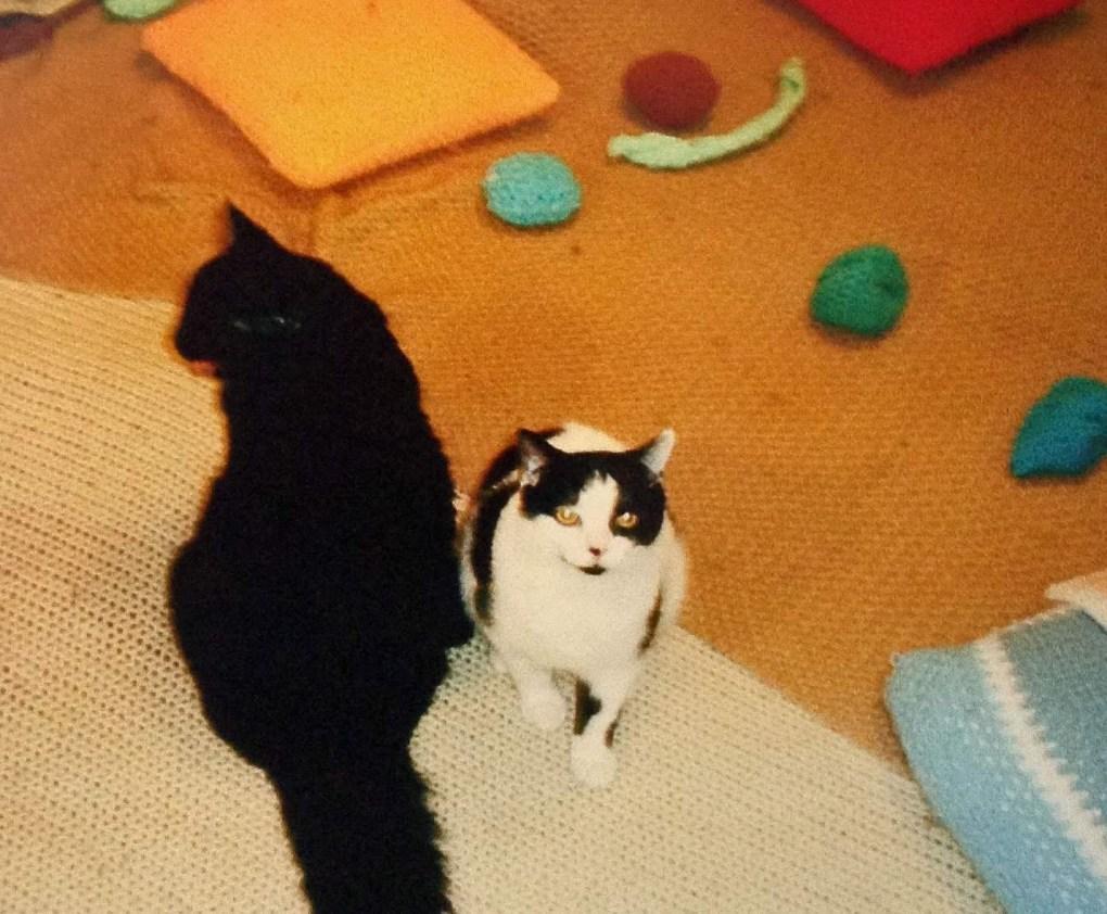 kittenstoys