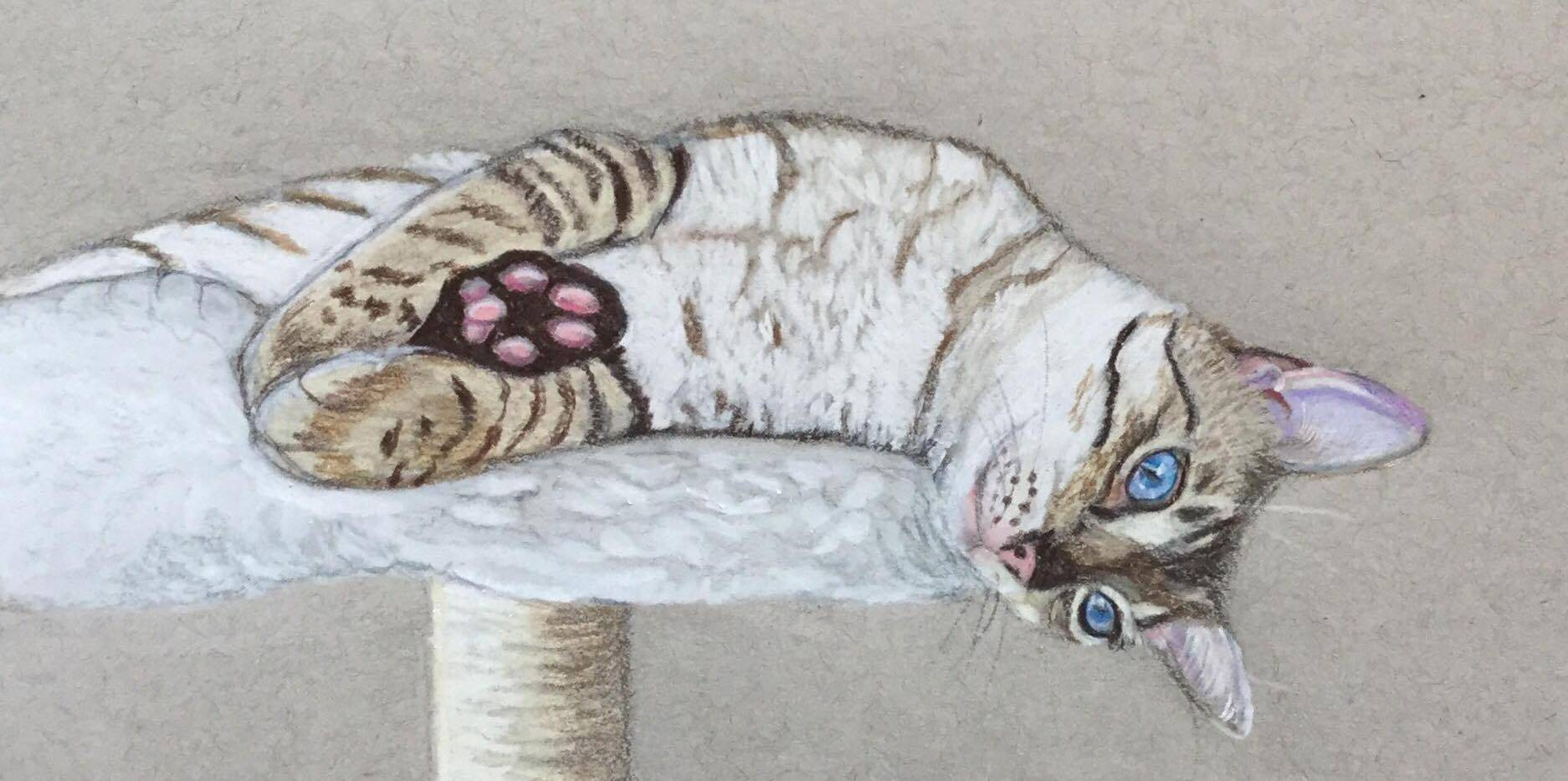 The Friday Art Cat: Just chilling – Snow Bengal