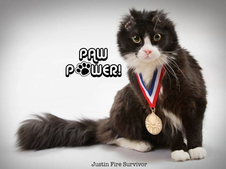 Justin fire Survivor Kitty Krusade Charity: Jake's Charity Appeal