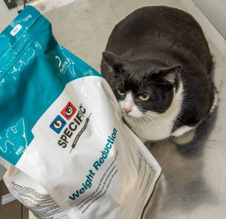 Flabby-feline Sox is taking on PDSA's Pet Fit Club diet to lose her excess pounds