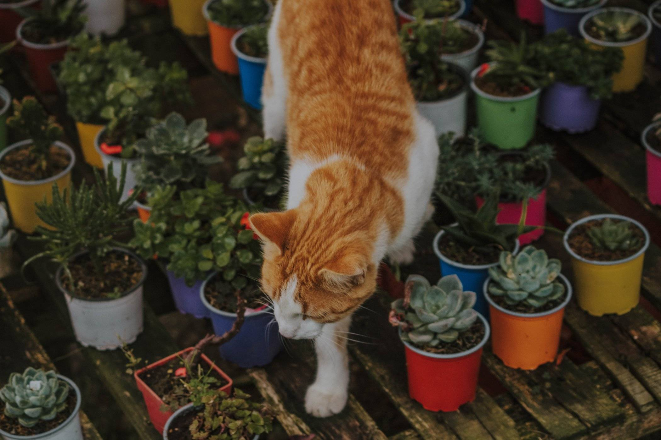 5 Flowering Plants That Are Safe Around Your Cat