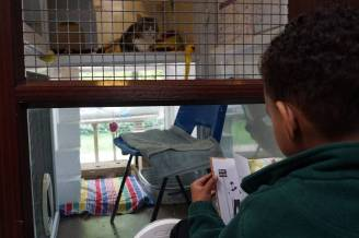 Some of the children reading to the cats in Mayhew's care