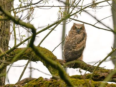 See 'Owlet (photo 3)'