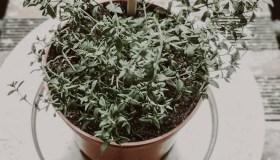 Kaunietė atidarė pirmąją šalyje Augalų prieglaudą