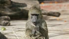 Zoologijos sodo rekonstrukcijos pristatymas