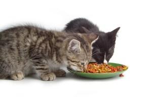 Ėdalas katėms