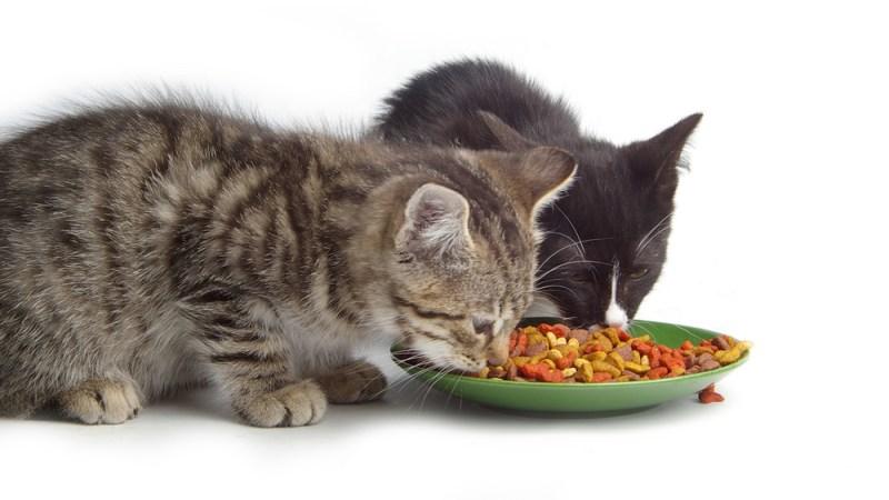 Dr. Stern ėdalai katėms