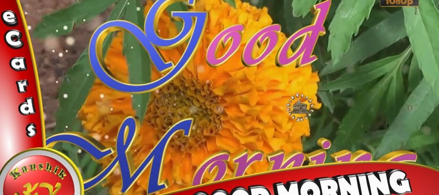Greetings Image of Good Morning Wishes Whatsapp