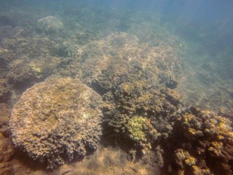 Coral colonies recovering 5.2017
