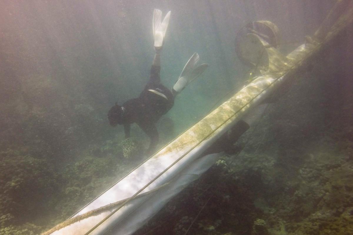 DAR Lindsey Kramer repositions broken coral