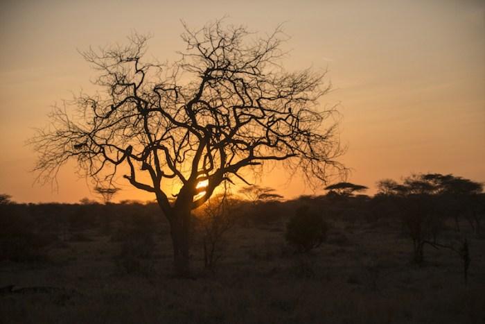 final de tarde no safari