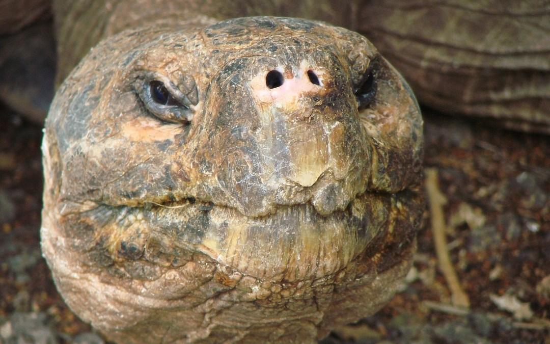 Obok Nas #2 KAWA z GALAPAGOS, czyli o kawie w żółwia cieniu