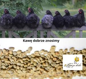 Serwis ekspresów do kawy Melita, Nivona, Saeco, Philips, De Longhi Kraków