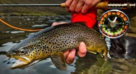 Planning your next fly fishing trip right way