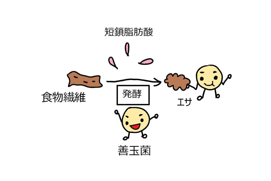 食物 発酵 繊維 性