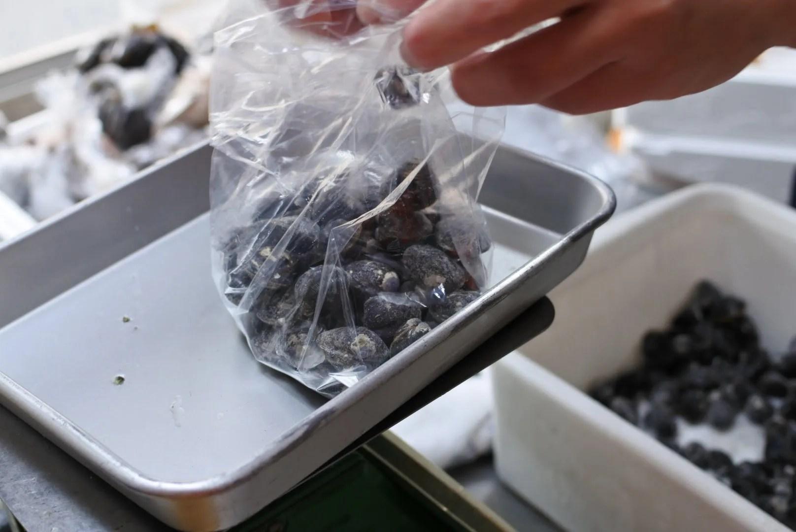 宍道湖産シジミ